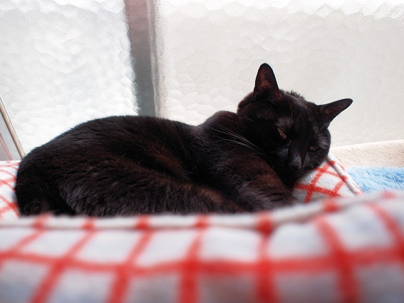 春の窓辺猫