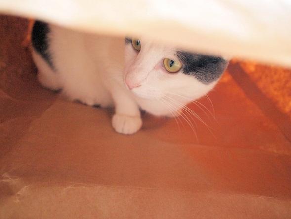 袋といえば猫