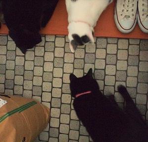 BUGnano VS 猫4ぴき