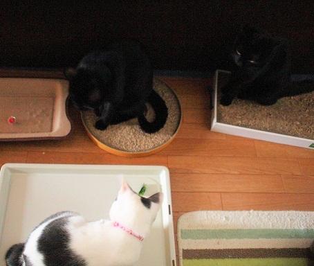 黒猫コンビ興味津々