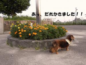 0730b_convert_20100730214215.jpg