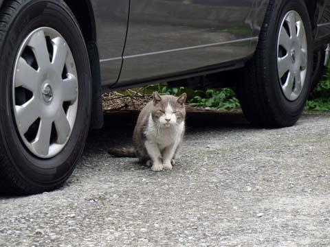 動物病院のそばで会った耳カットのネコと♪