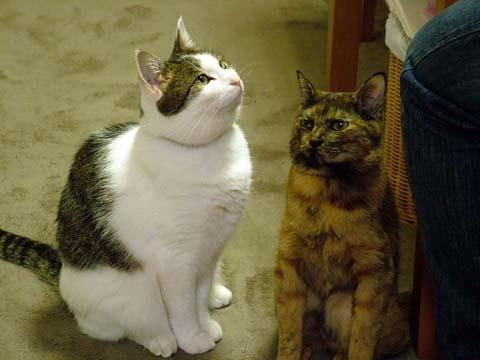 左:ネコ。右:シーサー(爆)