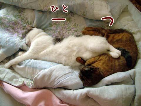 ネコとシーサー(爆)のコラボ寝「一つ」