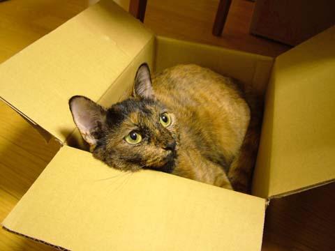 やっぱり箱が好き