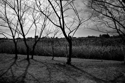 20110123-_DSC7494.jpg