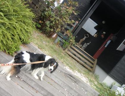 CIMG0327_20111011123314.jpg