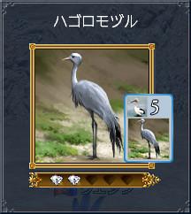 06_ハゴロモヅル