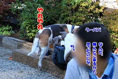 10_20101104013827.jpg