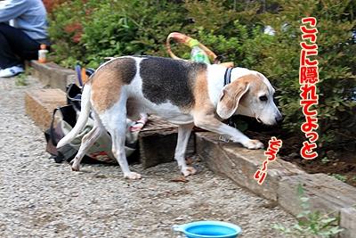 10_20101105220813.jpg