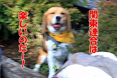 10_20101107230416.jpg