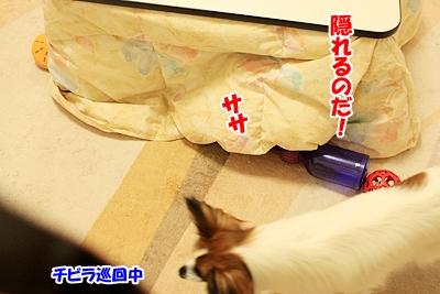 10_20101126214142.jpg