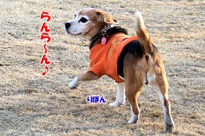 11_20110112214400.jpg