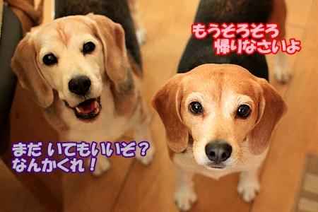 11_20110216215437.jpg