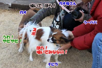 14_20110112231126.jpg