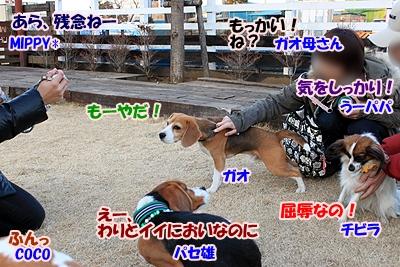 15_20110112231125.jpg