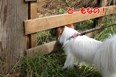 1_20101019234041.jpg