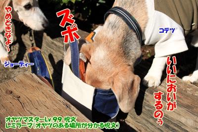 1_20101105220950.jpg