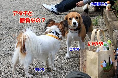 1_20101106190112.jpg