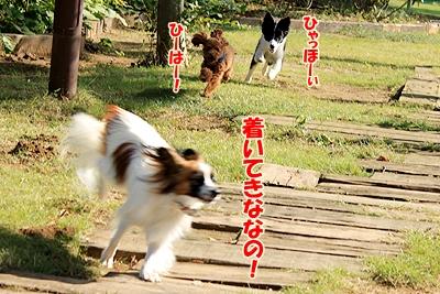 1_20101110223716.jpg