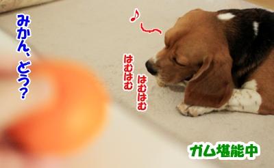 1_20101124133550.jpg