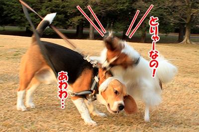 1_20101206195337.jpg
