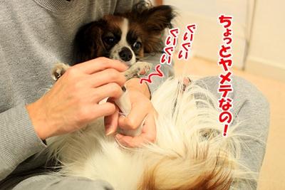 1_20110107150310.jpg