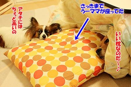 1_20110122210702.jpg