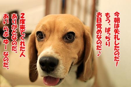 1_20110124110830.jpg
