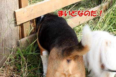 2_20101019234040.jpg