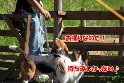 2_20101021095905.jpg