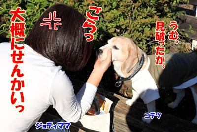 2_20101105220949.jpg