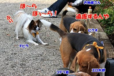2_20101106190112.jpg