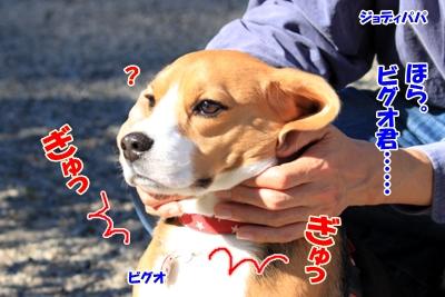 2_20101107230445.jpg