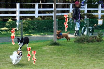 2_20101110223716.jpg