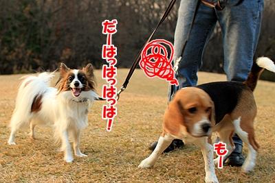 2_20101206195327.jpg