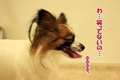 2_20101212114428.jpg