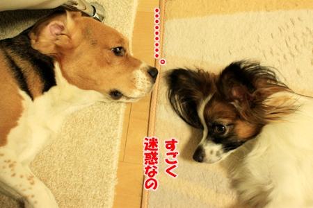 2_20110120204414.jpg