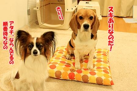 2_20110122210701.jpg