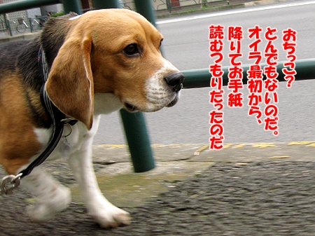 2_20110124222149.jpg