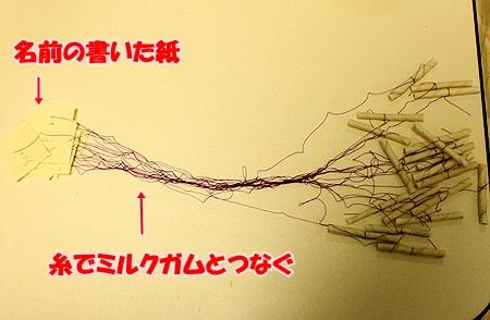 2_20110130232603.jpg