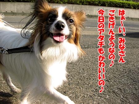 2_20110207210455.jpg