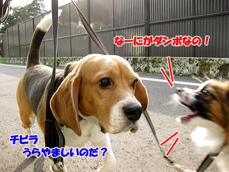 2_20110209012417.jpg