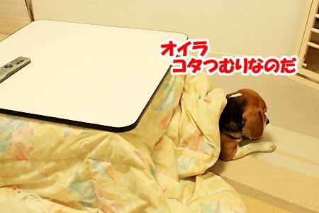 2_20110212015401.jpg