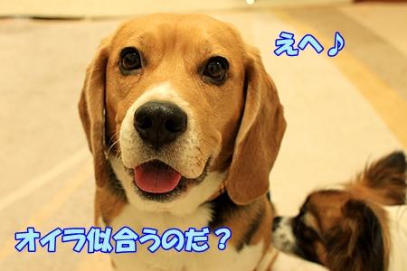 2_20110223001145.jpg