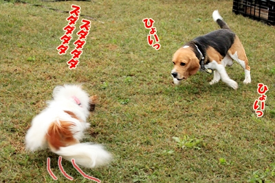 3_20101015121350.jpg