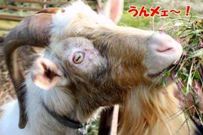 3_20101019234040.jpg
