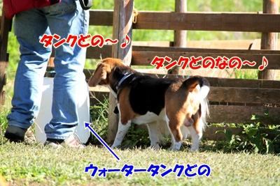 3_20101021095905.jpg