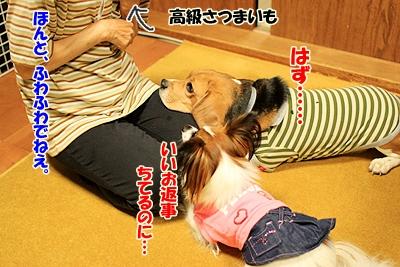 3_20101028210315.jpg
