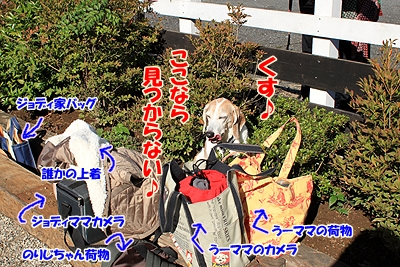 3_20101104013856.jpg